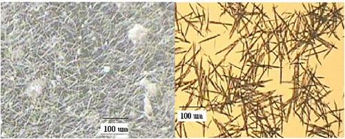 Nitech 管式连续结晶降低原料药含水量